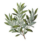 Huile vierge d'Olive BIO