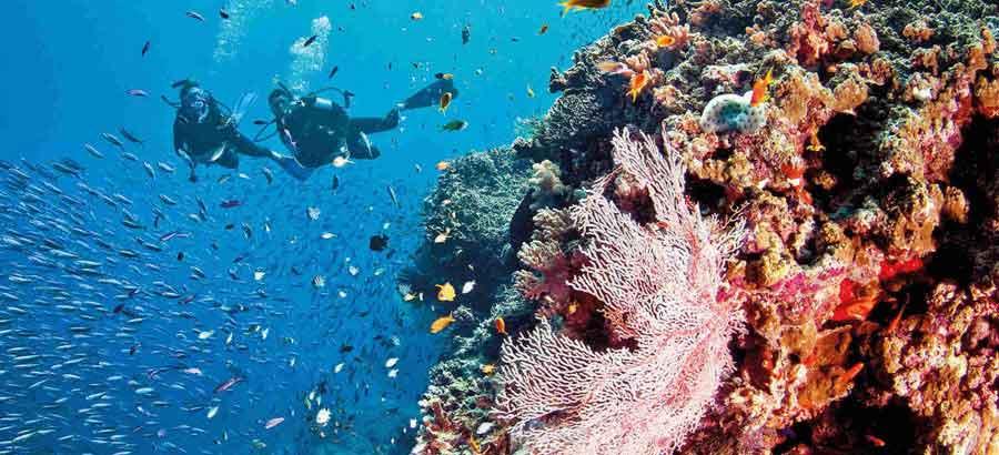 Replantez du corail avec EQ et Ocean Quest
