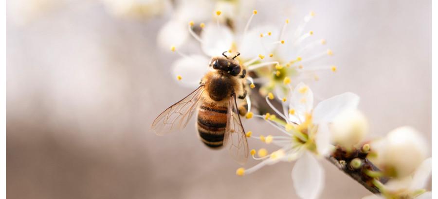 Journée mondiale des abeilles